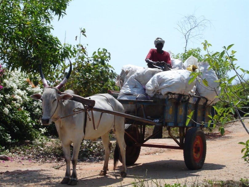 Bullock load (2)