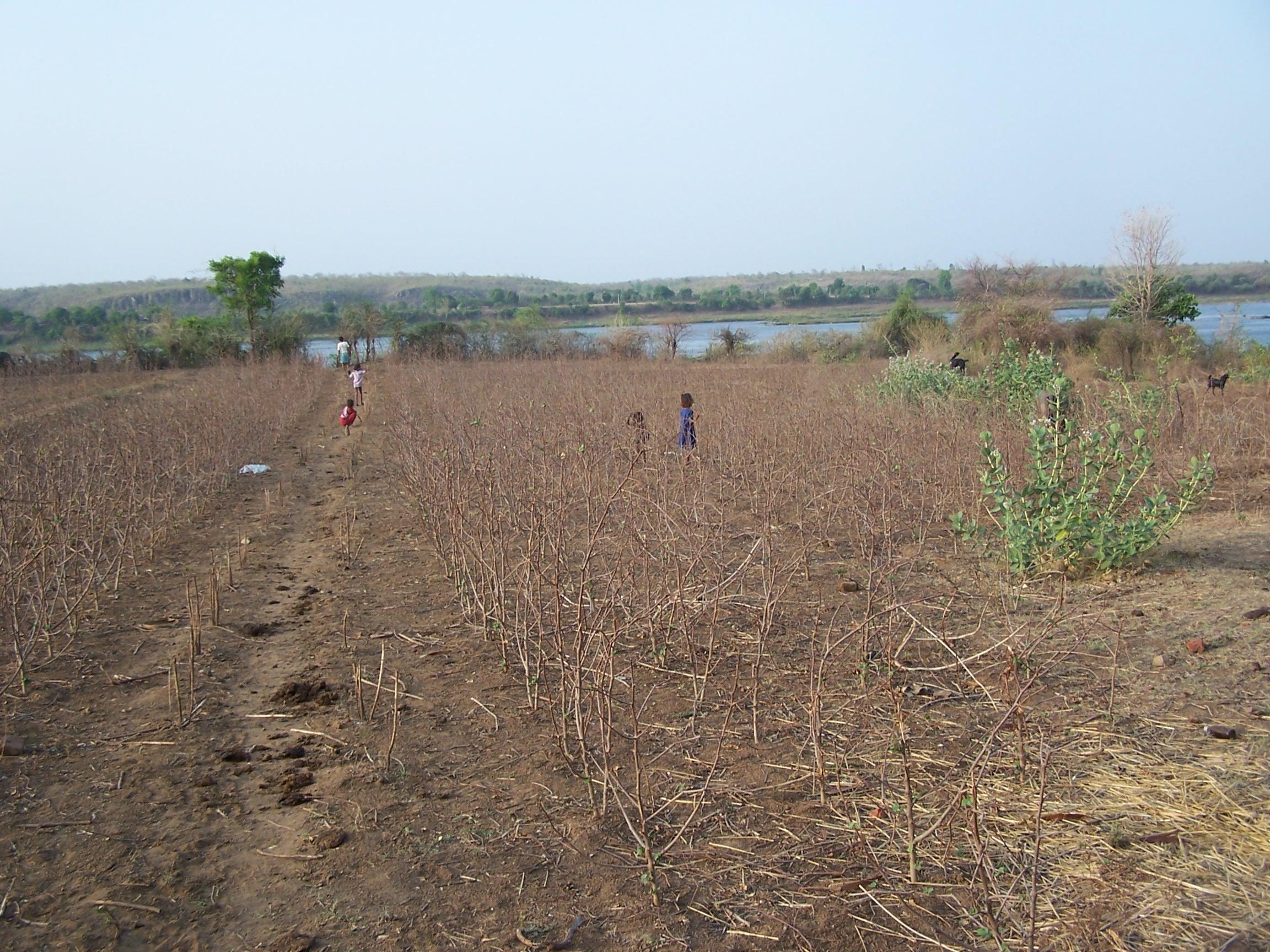 farm before